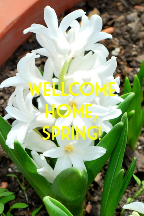 Wellcome home, spring